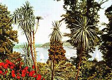 Tropeninsel Mainau im Bodensee , ungel. Ansichtskarte