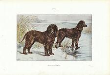 """Document ancien  Irish Water Spaniel monographie de chien de chasse 1965 """""""