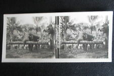 PHOTO STEREOSCOPIQUE CEYLAN SRI LANKA TRANSPORT DE BOIS D'ARBRES  ELEPHANT 1905