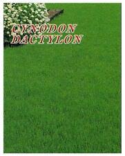 CYNODON DACTYLON o Erba Capriola - 2 Confezioni da 500gr.