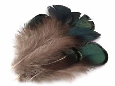approx. 100 Pheasant feather Springs decorative Length 4,5-9 cm