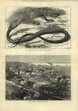 1875 Thames Goldfields Grahamstown New Zealand Snake Eating Serpent