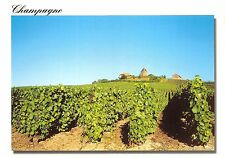 B52609 Champagne vineyard france