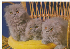 Animals Postcard - Cats - Three Fluffy Cats Sat On A Cushion On A Chair  AB1820