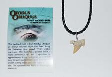 OTODUS Shark Tooth Necklace Genuine Fossil 1/2 to 3/4 inch Size S #19 2o
