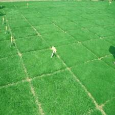 10000Pcs Tall Fescue Green Grass Seed Festuca Arundinacea Lawn Field Turf Seeds