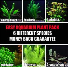 25+ Stems / 6 Species - Live Aquarium Plant  Package - Low Maintenance