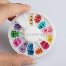 36pcs 12 Color Dried Dry Flower Nail Art Wheel Decoration Manicure Tips Fashion