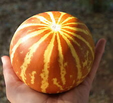 TIGGER MELON Heirloom ☆ Fun & Easy ☆ GREAT FOR KIDS ☆ SWEET & YUMMY! ☆ 15+ Seeds