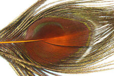 1 x Oeil de PAON ORANGE pour QUILL EBARBE montage mouche fly tying peacock pavo