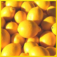 10 ml huiles parfumées parfum concentré ❀ candle making savon bain bombe ❀ lemon
