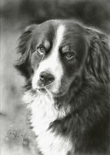 Original Zeichnung Berner Sennenhund Bernese mountain dog drawing von A. Franke