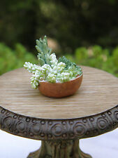 Miniature Dollhouse FAIRY GARDEN ~ Succulent Plants Planter Bowl ~ NEW