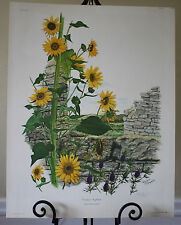 Maryrose Wampler 22x28 Common Sunflower LE Signed Print COA Plate 24 Floral 1978