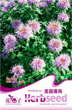 1 Pack 50 Wild Begamot Mentha Seeds Spearmint Monarda Peppermint D027