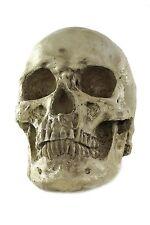 Halloween Totenschädel menschlicher Schädel Skull Gerippe VQ-057