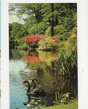 The Savill Garden Windsor Great Park Australian Black Swans Postcard 087b