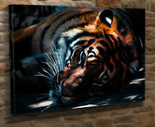 """Box Canvas Wall Art Print Picture Tiger Lying Down Large 18""""x32"""" Giclee HT02"""