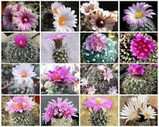 Turbinicarpus MIX exotic niniature mexican cacti rare cactus seed aloe 20 SEEDS