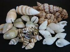 50 pce Mix Variety Drilled Sea Shell Beads Various Sizes & Shapes