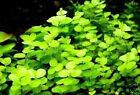 Filter & Bodengrund : Hübscher Unterwasserwald / Wasserpflanzen für das Aquarium