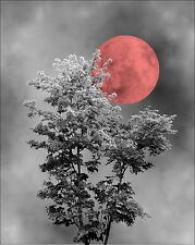 Red Gray Home Decor Wall Art Photo Blood Moon Tree Bedroom Bathroom Office Foyer