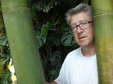 Super Bambus für den Garten: winterhart, frosthart, wächst schnell !
