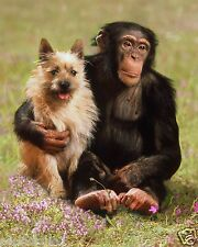 Monkey & Dog Friend 8 x 10 GLOSSY Photo Picture Image #12