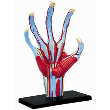 *NEW* 4D Master Bitz Human Anatomy Series - Hand Model - 28 pieces