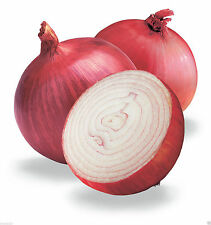 Red Grano Onion Seed (2,000 Seed  ) Organic Short Day Onion-Plant Spring/ fall !