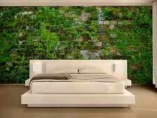 Wall with Green Moss  Wall Mural Photo Wallpaper GIANT DECOR Paper Poster