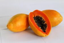 "Liveseeds-World No1 papaya ""Rojo ganador"" 20 semillas"