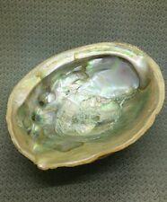 """Red Abalone Shell  7"""" - lot b1b"""