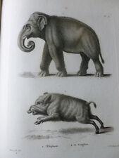 GRAVURE XVIIIe SUR CUIVRE / L'ELEPHANT - LE SANGLIER