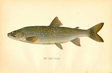 Rare 1892 Antique Denton Fish Print ~ The Lake Trout ~ Excellent Details!