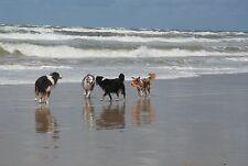 Ferienhaus Dänemark, Nordsee, Urlaub mit Hund/oder eigenem Pferd - Strandreiten