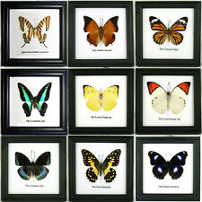 9 Butterfly Wall Art Decor Display in Frame Set Insect Taxidermy Gift FS gpasy