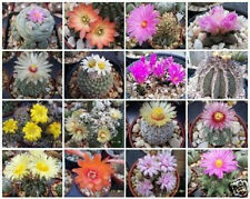 Exotic Cactus collection variety mix @ rare cacti seed succulents  30 seeds lot