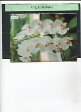 P163 # MALAYSIA USED PICTURE POST CARD * ORCHID PHALAENOPSIS MAE C. CONKLIN