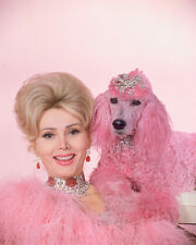 ZSA ZSA GABOR COLOR 8X10 PHOTOGRAPH PINK POODLE WOW!