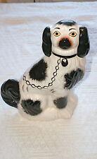 Black and white Staffordshire dog