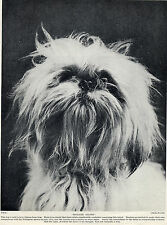 LHASA APSO HEAD STUDY OF NAMED DOG LOVELY OLD 1930'S DOG PRINT