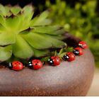 50PCS Miniature Fairy Doll House Garden Red Beetle Ladybug Ornament Craft/Decor