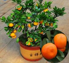100 Graines Orange A plantés en pot