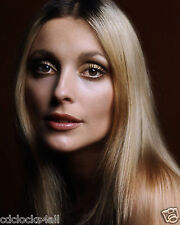 Sharon Tate 8 x 10 GLOSSY Photo Picture IMAGE #2