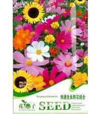 FD1467 Fast Growing Wildflower Mix colorful Seeds ~1 Pack 200 Seeds~ Free Ship