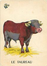 ANCIENNE IMAGE OLD CARD TAUREAU Bull STIER
