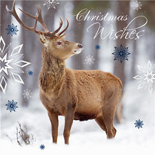 Snowy Stag Charity Christmas Cards Pack of 10 Photographic Stag Xmas Cards NEW