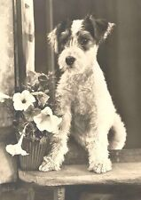 Wire Fox Terrier Puppy Dog Vintage 1931 Photo LARGE  8 New Blank Note Cards