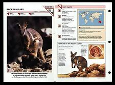 """ROCK WALLABY"" WILD LIFE FACT FILE ANIMAL CARD/HOME SCHOOL STUDY"